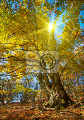 Gran árbol de otoño