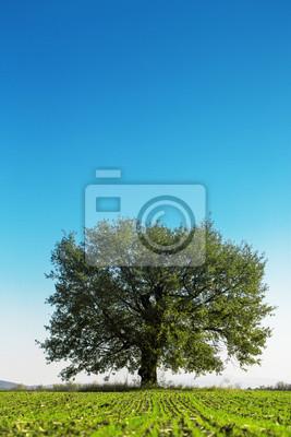 Gran árbol verde