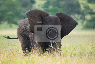 Gran elefante en la sabana africana