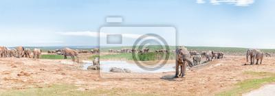 Gran grupo de elefantes