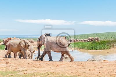 Gran grupo de elefantes de color fango