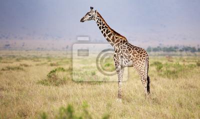 Gran jirafa adulta