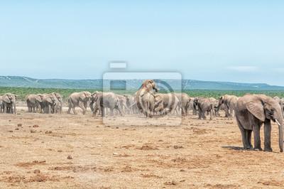 Gran manada de elefantes