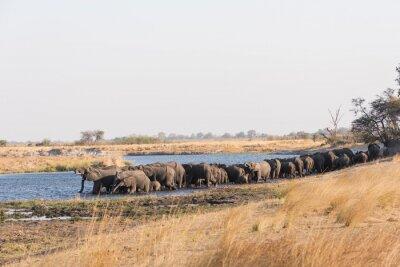 Gran manada de elefantes bebiendo en el río