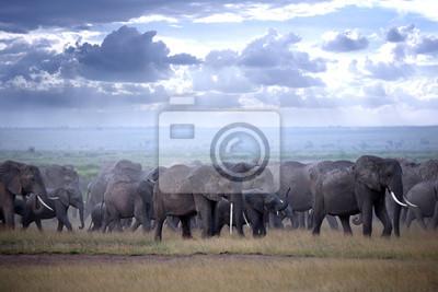 Gran manada de elefantes en la sabana africana en la luz de la tarde brumosa