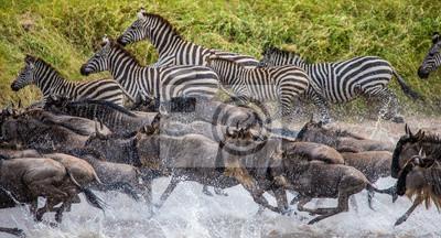 Gran migración. Kenia. Tanzania. Parque Nacional Maasai Mara.