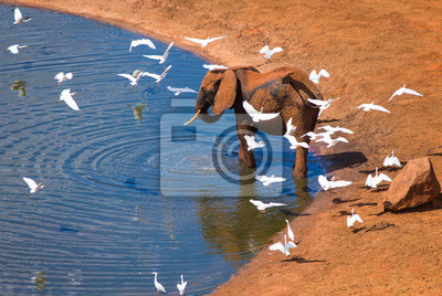 Grandes elefantes con pájaros blancos cerca de pozo de agua