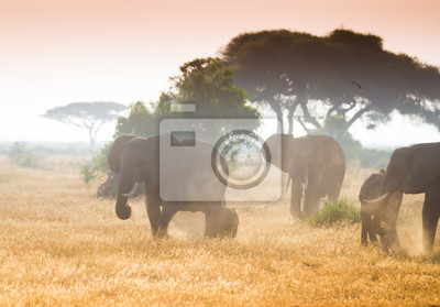 Grandes elefantes en la sabana africana en la luz de la mañana brumosa
