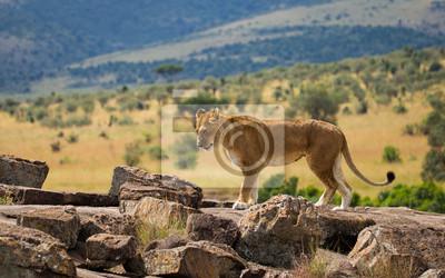 Grandes leones en la sabana africana