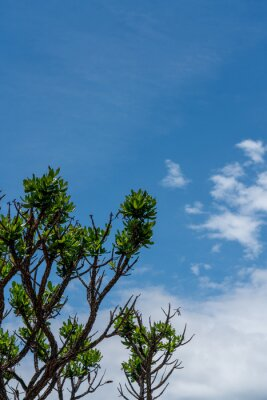 Green leaves with a blue sky background