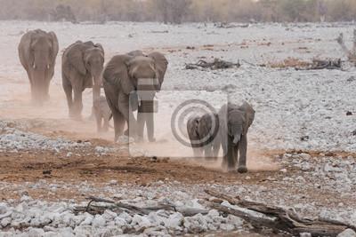 Grupo familiar de elefantes marchando por el desierto