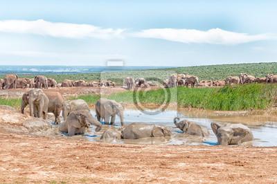 Grupo grande de elefantes