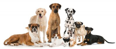 Póster Gruppe verschiedener Hunde - Grupo de perros