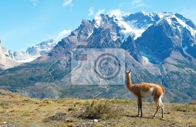 Guanaco en el Parque Nacional Torres del Paine admirando las montañas