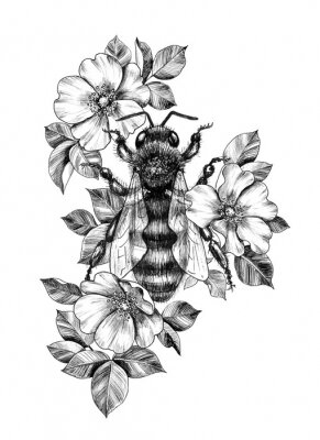 Póster Hand Drawn Monochrome Bee among  Dog Rose Flowers