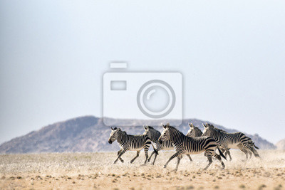 Hartmaans Mountain Zebra en el Parque Nacional Namib Naukluft.
