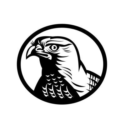 Head of a Northern Goshawk a Medium-Large Diurnal Raptor Oval Retro Woodcut Black and White