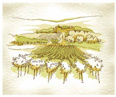 Póster Hecho a mano los campos de uva de croquis y viñedos.
