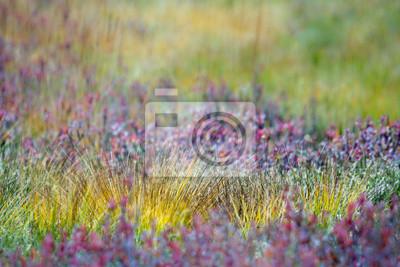 Herbes de la colorées Tourbière