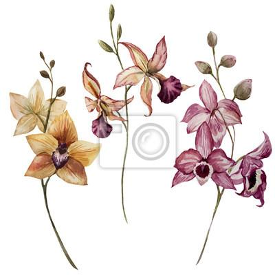 Hermosa flor de la orquídea