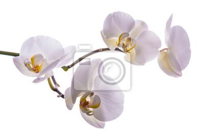 Hermosa flor orquídea 4