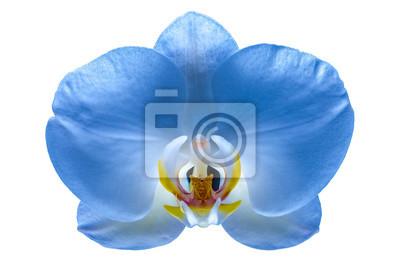 Hermosa flor orquídea 6