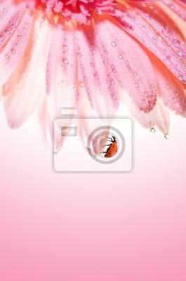 Hermosa flor rosa con una mariquita en él es pétalos