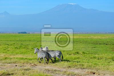 Hermosa montaña de Kilimanjaro y cebras, Kenia, Parque Nacional de Amboseli, África