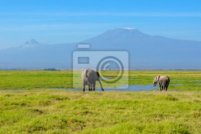 Hermosa montaña del Kilimanjaro y elefantes, Kenia, Parque Nacional de Amboseli, África