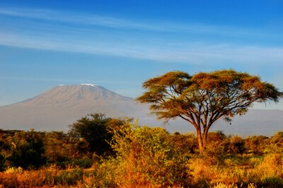 Póster Hermosa montaña Kilimanjaro después de la salida del sol en la mañana, Kenia, Parque Nacional de Amboseli, África