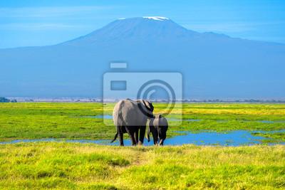 Hermosa montaña Kilimanjaro y elefantes, Kenia, Parque Nacional de Amboseli, África