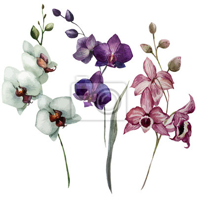Hermosa orquídea flower3