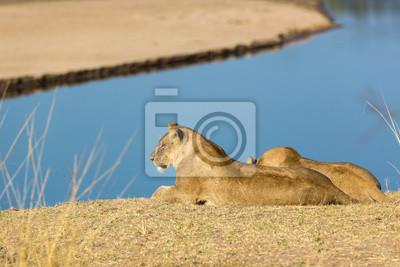 Hermosa vida silvestre en South Luangwa, Zambia, África