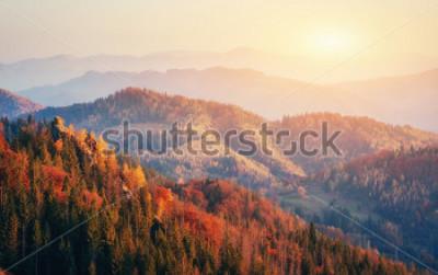 Póster Hermosa vista del bosque en un día soleado. Paisaje de otoño Montes de Cárpatos. Ucrania, Europa