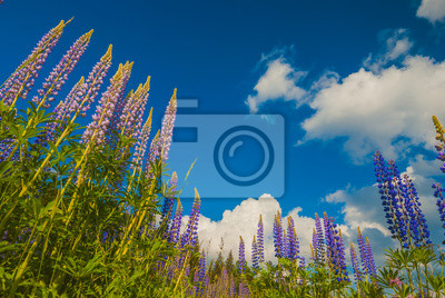 Hermosas flores púrpuras