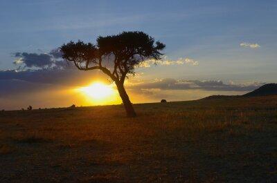 Hermoso amanecer o atardecer en la sabana africana con árbol de acacia, Parque Nacional Masai Mara, Kenia, África