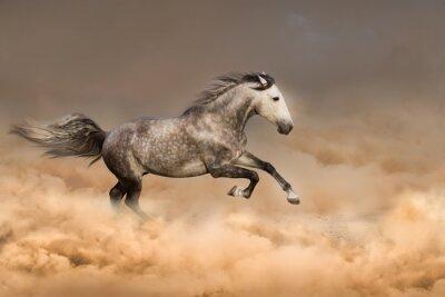 Póster Hermoso caballo correr galopando en polvo