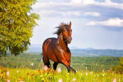 Póster hermoso caballo salta en un prado verde
