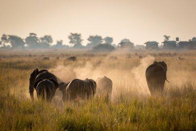 Póster Hermoso de la fauna en el Parque Nacional de Chobe, Botswana