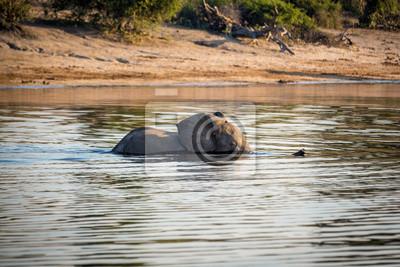 Hermoso de la fauna en el Parque Nacional de Chobe, Botswana