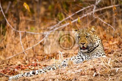 Hermoso de la fauna en el Parque Nacional Luangwa Sur, Zambia, África