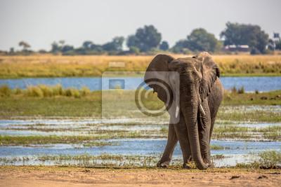 Hermoso elefante en el Área de Conservación Khwai en Botswana, África