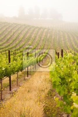 Hermoso Lush Vineyard uva