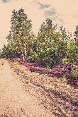 Póster Hermoso paisaje rural con brezo en flor