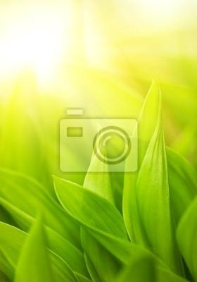 Hierba verde fresca (someras DOF)