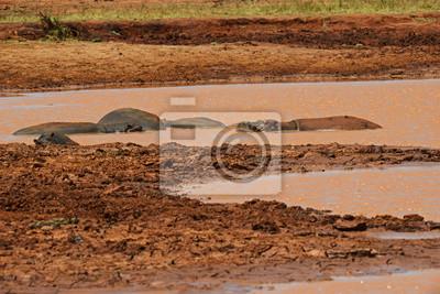 Hipopótamo en el parque de Tsavo