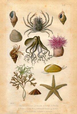 Póster Histoire naturel Fond Marin