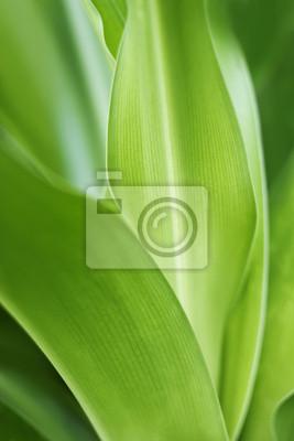 Hoja de la planta verde y fondo abstracto fresco