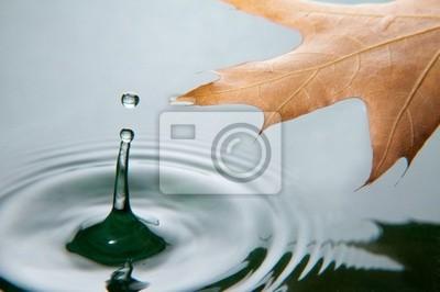 Hoja sobre el agua con el chapoteo