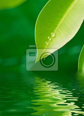Hoja verde bajo el agua